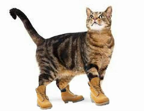 cat with timbs